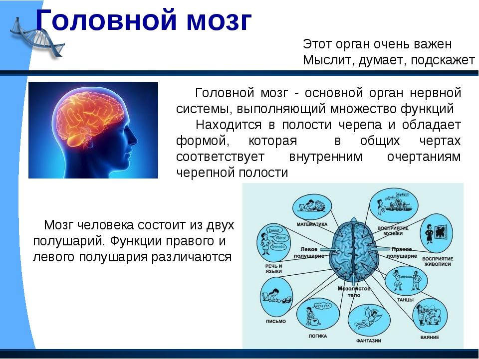 Головной мозг Этот орган очень важен Мыслит, думает, подскажет Головной мозг...