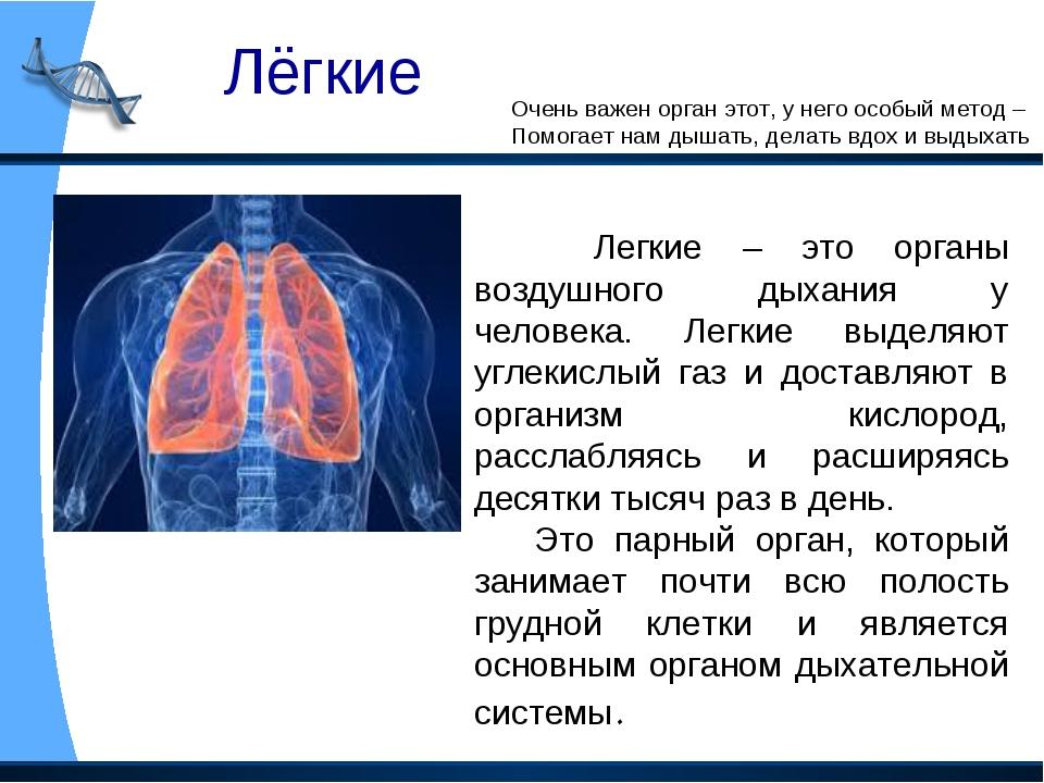 Лёгкие Очень важен орган этот, у него особый метод – Помогает нам дышать, дел...
