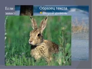 Если фон среды не является постоянным, в зависимости от сезона года – животны