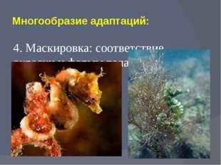 Многообразие адаптаций: 4. Маскировка: соответствие окраски и формы тела объе