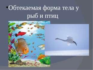 Обтекаемая форма тела у рыб и птиц