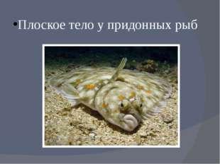 Плоское тело у придонных рыб