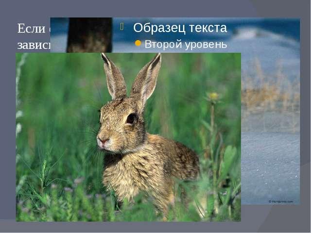 Если фон среды не является постоянным, в зависимости от сезона года – животны...