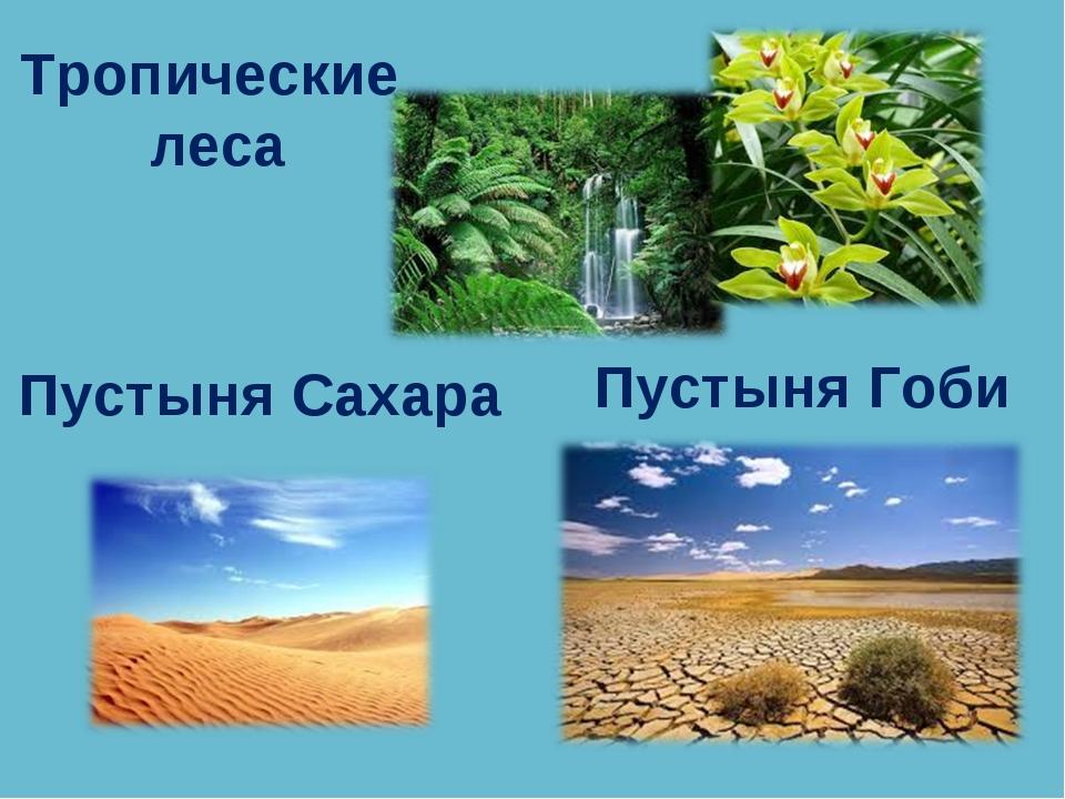 Тропические леса Пустыня Сахара Пустыня Гоби