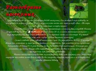 Разнообразие насекомых.  Существует более миллиона различных видов насекомых
