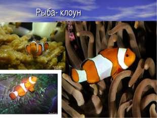Рыба- клоун