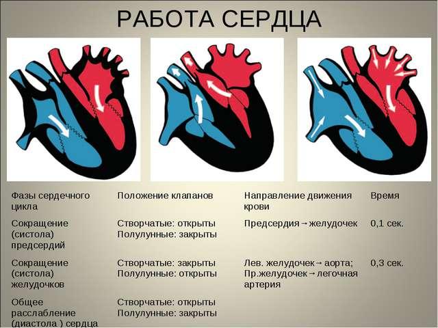 РАБОТА СЕРДЦА Фазы сердечного циклаПоложение клапановНаправление движения к...
