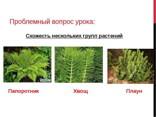 Проблемный вопрос урока: Схожесть нескольких групп растений Папоротник Хвощ П...