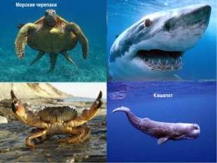 Кашалот Морские черепахи