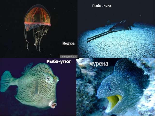 мурена Медуза Рыба - пила