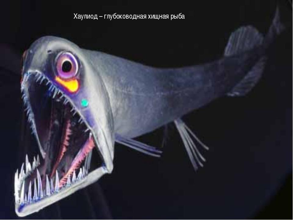 Хаулиод – глубоководная хищная рыба