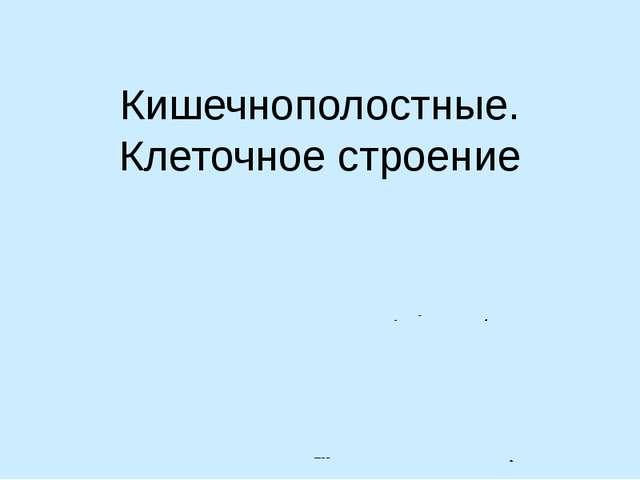 Кишечнополостные. Клеточное строение Автор: Лебедев С.Н. ГОУ школа-интернат V...