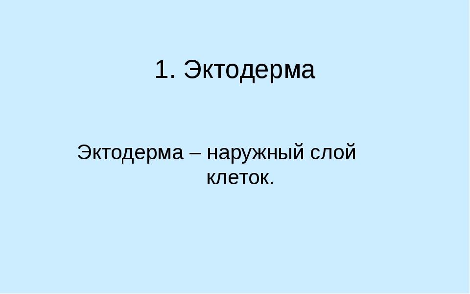 1. Эктодерма Эктодерма – наружный слой клеток.