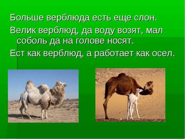 Больше верблюда есть еще слон. Велик верблюд, да воду возят, мал соболь да на...