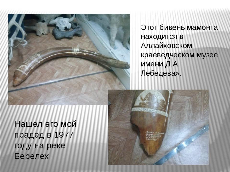 Этот бивень мамонта находится в Аллайховском краеведческом музее имени Д.А. Л...