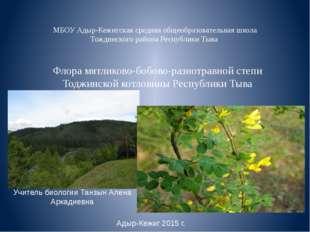 Флора мятликово-бобово-разнотравной степи Тоджинской котловины Республики Тыв