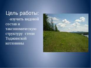 Цель работы: -изучить видовой состав и таксономическую структуру степи Тоджин