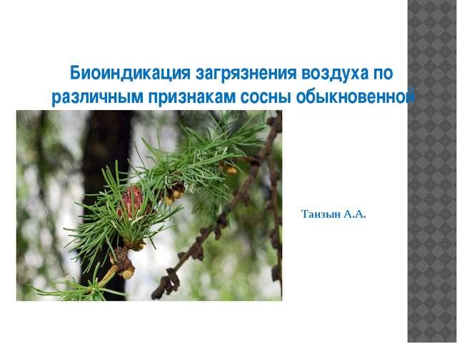 Биоиндикация загрязнения воздуха по различным признакам сосны обыкновенной Та...