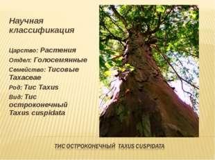 Научная классификация Царство: Растения Отдел: Голосемянные Семейство: Тисовы