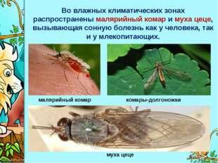 Во влажных климатических зонах распространенымалярийный комари мухацеце, в