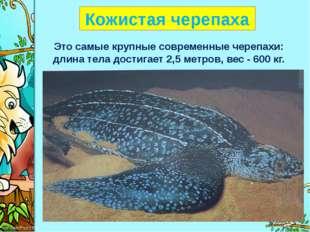 Кожистая черепаха Это самые крупные современные черепахи: длина тела достига