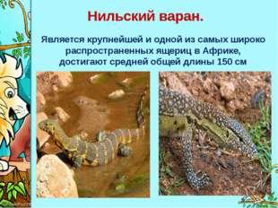 Нильский варан. Является крупнейшей и одной из самых широко распространенных