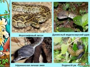 Иероглифовый питон Древесный мадагаскарский удав Африканская яичная змея Водя