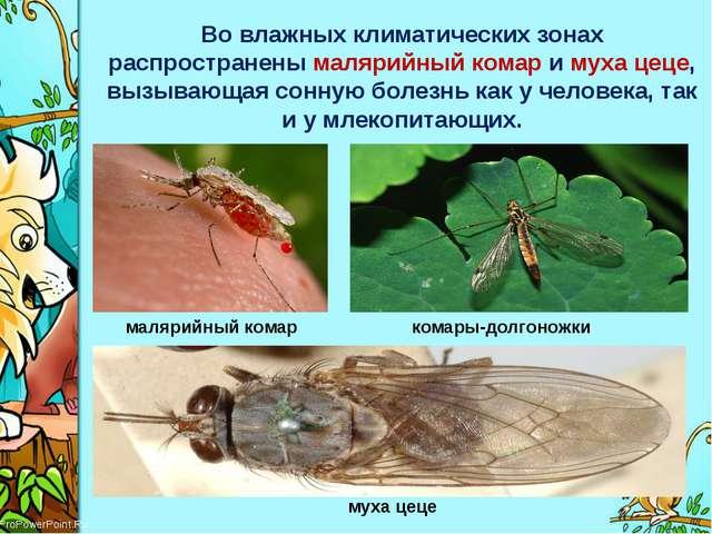 Во влажных климатических зонах распространенымалярийный комари мухацеце, в...