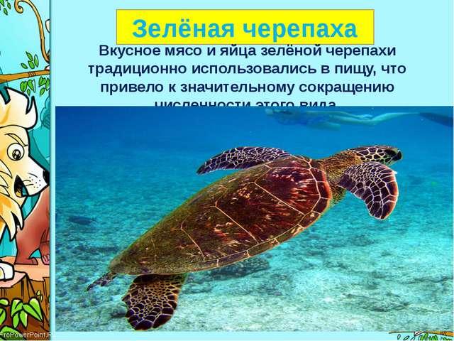 Зелёная черепаха Вкусноемясои яйца зелёной черепахи традиционноиспользова...