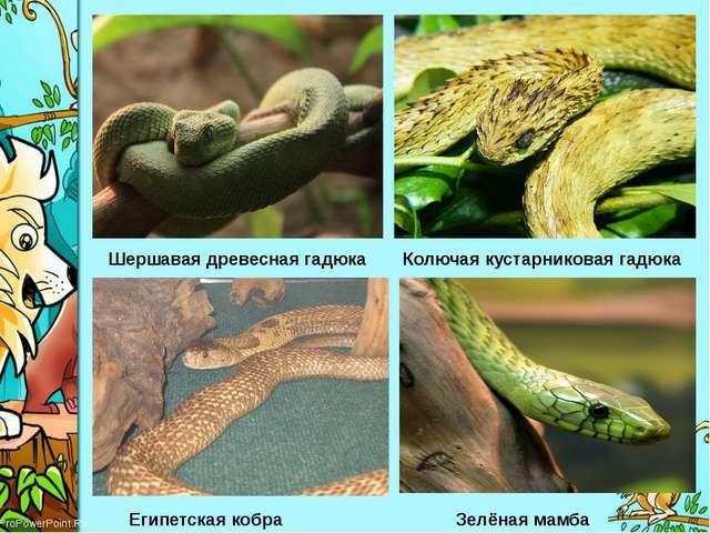 Шершавая древесная гадюка Колючая кустарниковая гадюка Египетская кобра Зелён...