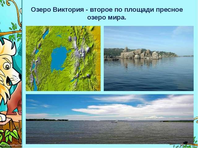 Озеро Виктория - второе по площади пресное озеро мира. ProPowerPoint.Ru