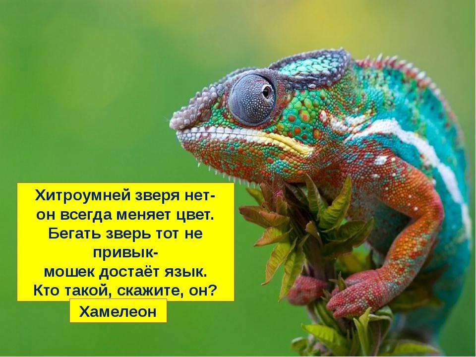 Хитроумней зверя нет- он всегда меняет цвет. Бегать зверь тот не привык- моше...