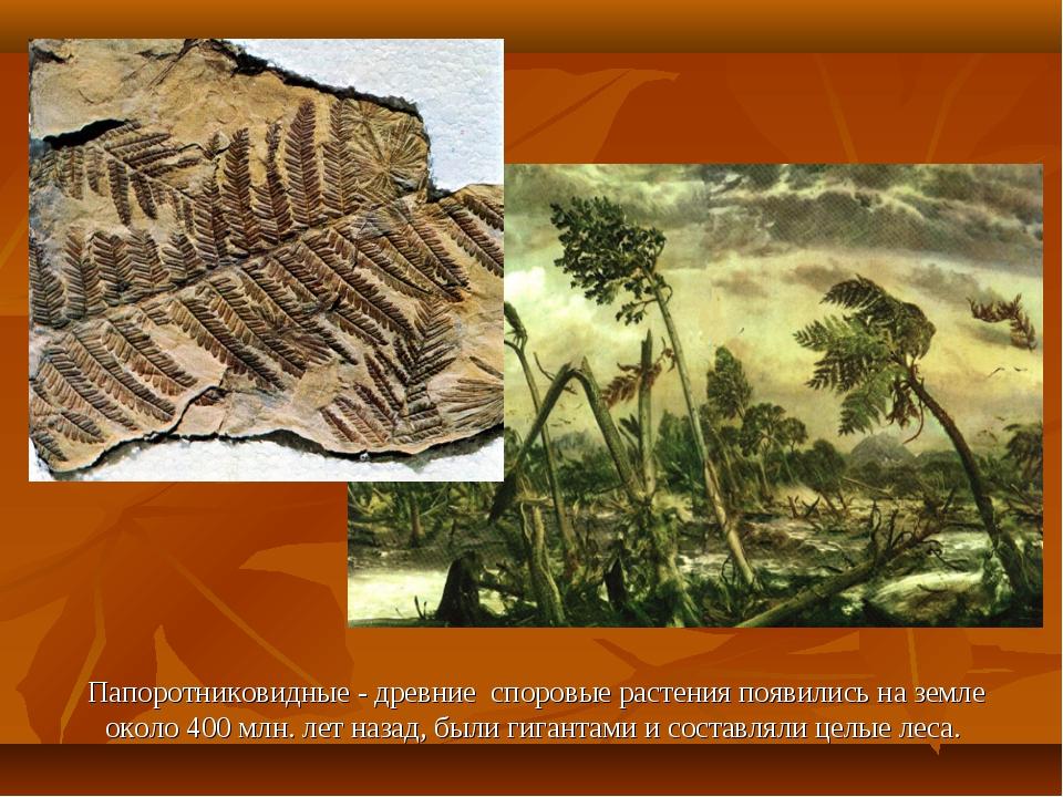 Папоротниковидные - древние споровые растения появились на земле около 400 м...