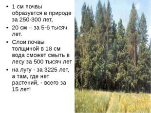 1 см почвы образуется в природе за 250-300 лет, 20 см – за 5-6 тысяч лет. Сло