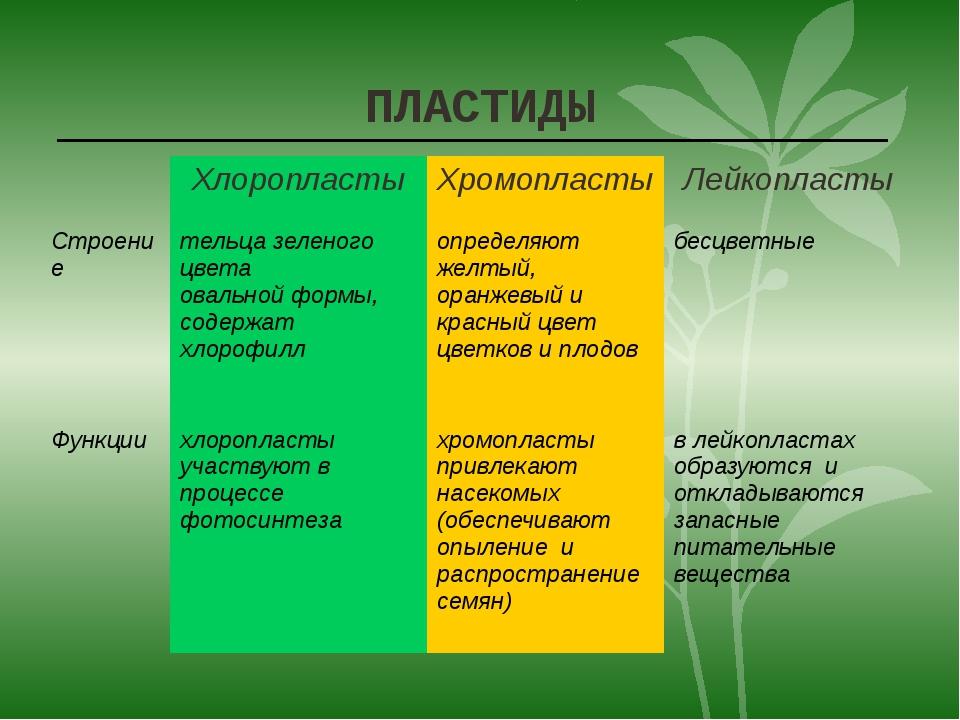 ПЛАСТИДЫ Хлоропласты Хромопласты Лейкопласты Строение тельца зеленого цвета о...
