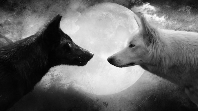 C:\Users\zainulina.PKU\Documents\2014-2015\Discussion club\иллюстрации\Black-and-White-Wolf-Pictures-HD-Wallpaper-1080x607.jpg