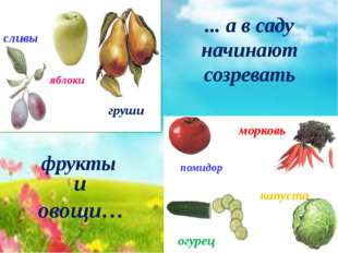 помидор морковь огурец капуста яблоки сливы груши ... а в саду начинают созре