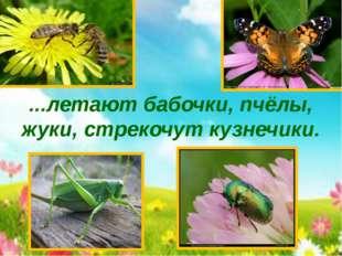 ...летают бабочки, пчёлы, жуки, стрекочут кузнечики.