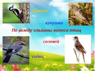 По всюду слышны голоса птиц сойка дятел кукушка соловей