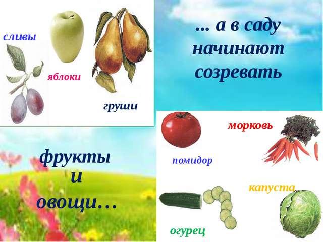 помидор морковь огурец капуста яблоки сливы груши ... а в саду начинают созре...