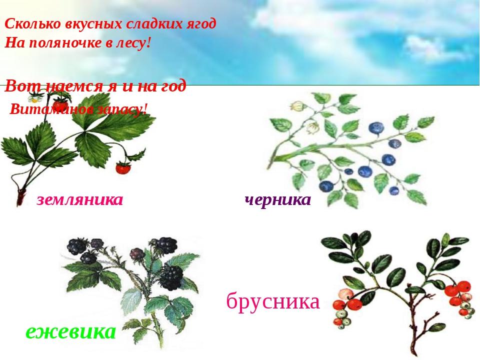 земляника черника ежевика брусника Сколько вкусных сладких ягод На поляночке...