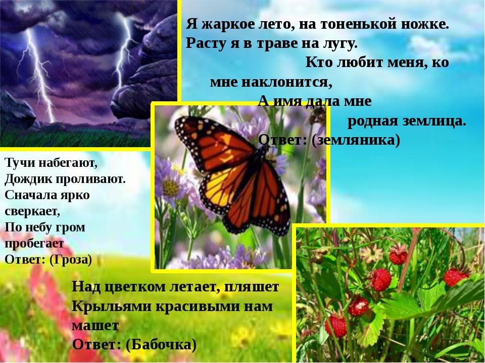 Над цветком летает, пляшет Крыльями красивыми нам машет Ответ: (Бабочка) Я жа...