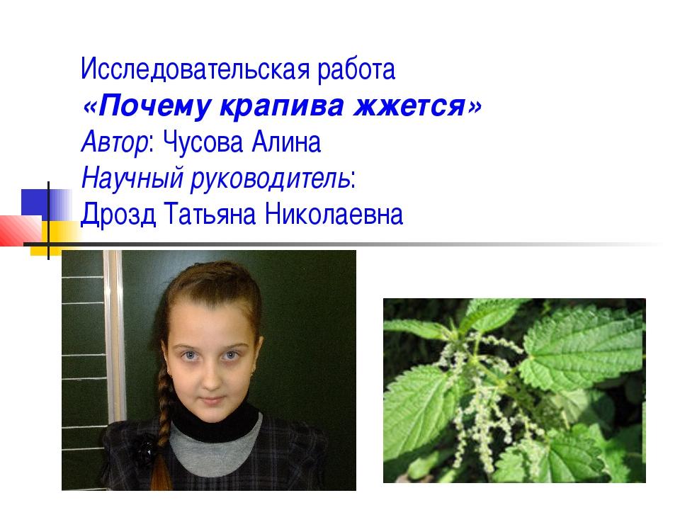Исследовательская работа «Почему крапива жжется» Автор: Чусова Алина Научный...