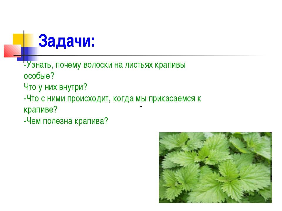 Задачи: - -Узнать, почему волоски на листьях крапивы особые? Что у них внутри...