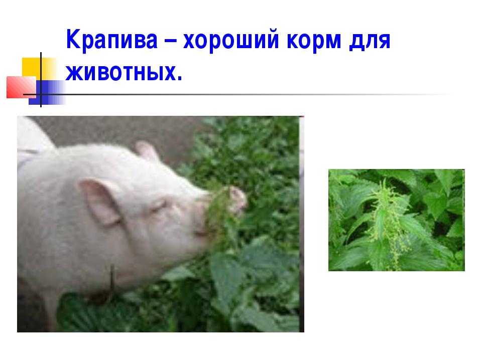 Крапива – хороший корм для животных.