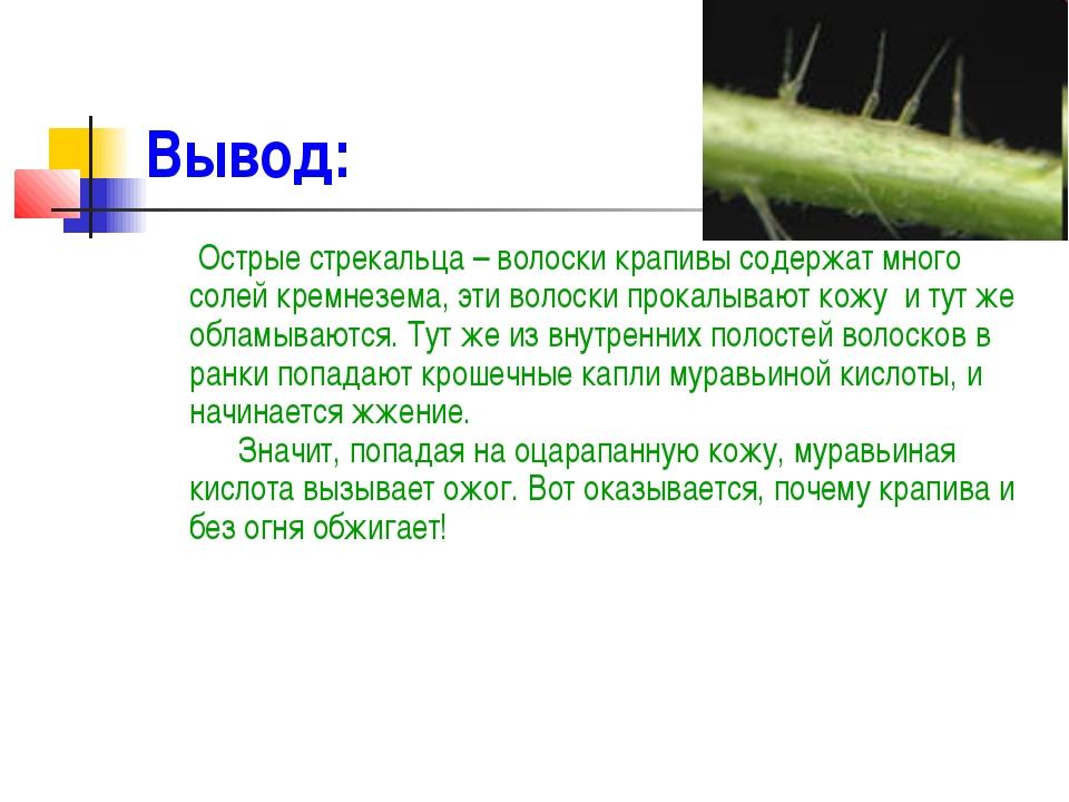 Вывод: Острые стрекальца – волоски крапивы содержат много солей кремнезема, э...
