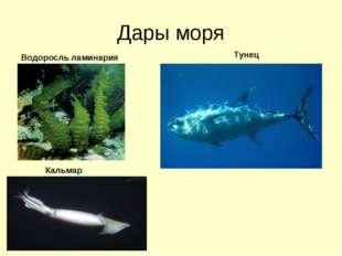 Дары моря Водоросль ламинария Тунец Кальмар
