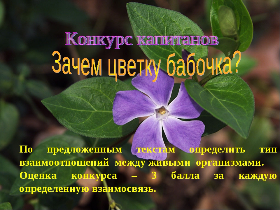 По предложенным текстам определить тип взаимоотношений между живыми организма...