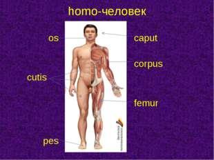 oscaput  corpus cutis  femur  pes homo-человек