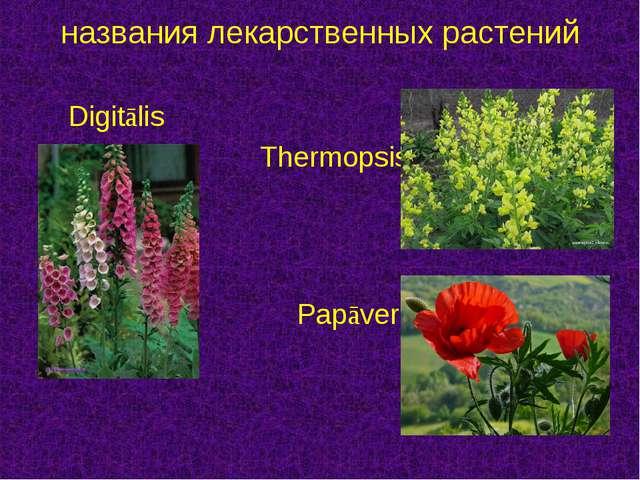 Digitālis  Thermopsis  Papāver названия лекарственных растений